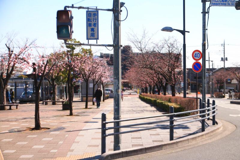 ミエル川口 桜