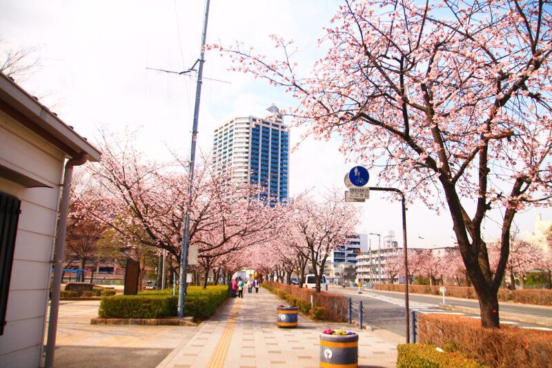 川口元郷駅 桜