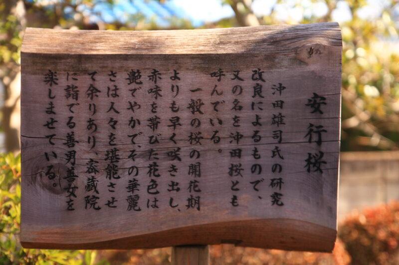 密蔵院 参道