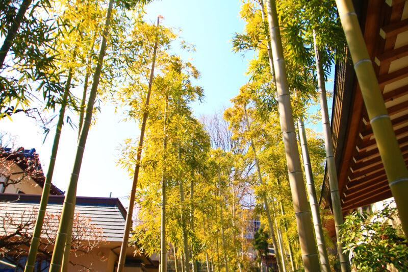 密蔵院 竹