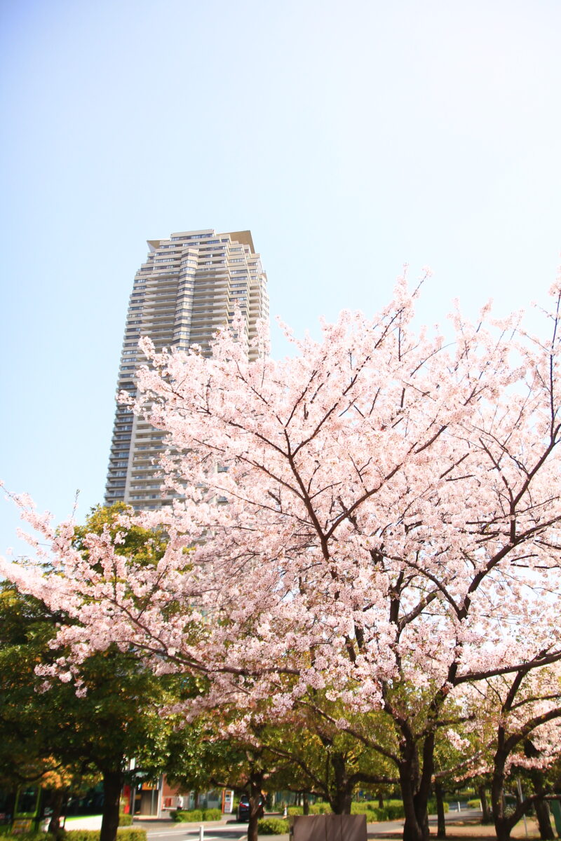 川口元郷 桜
