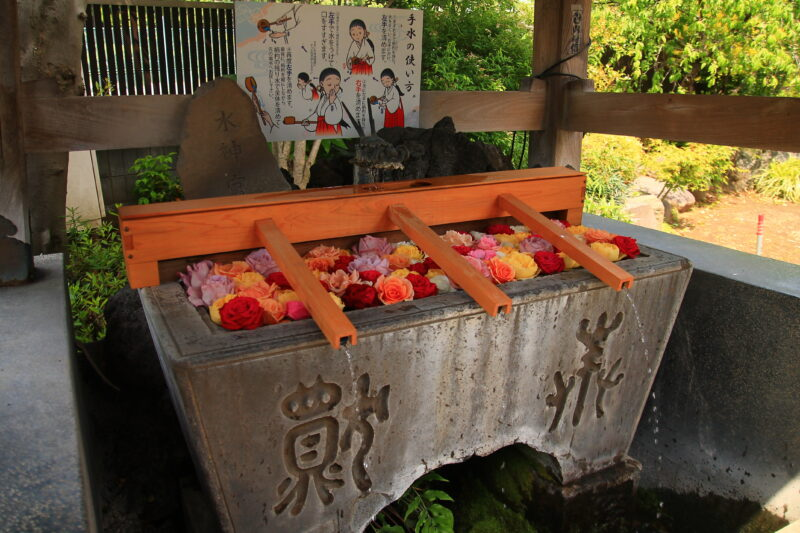 鳩ヶ谷氷川神社 薔薇手水